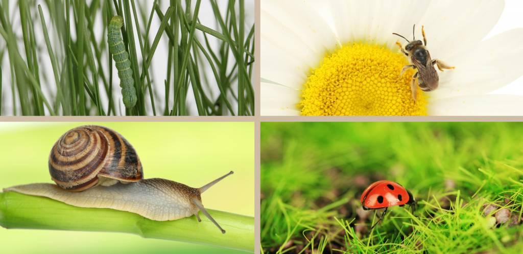 biodiversité paysage montpellier